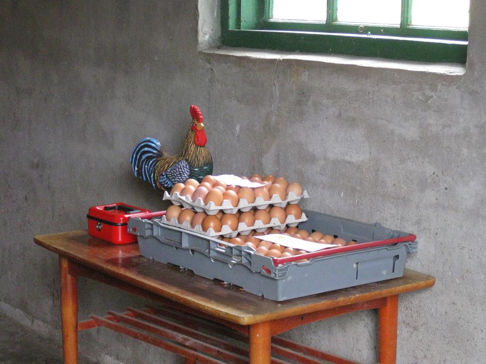 Ägg från Frigående Höns Utomhus - Freda Gård i Sandhem